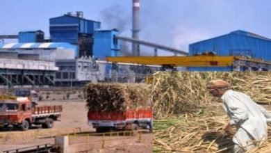 Photo of Sugar Mills Appealed from Government to Bound Farmer