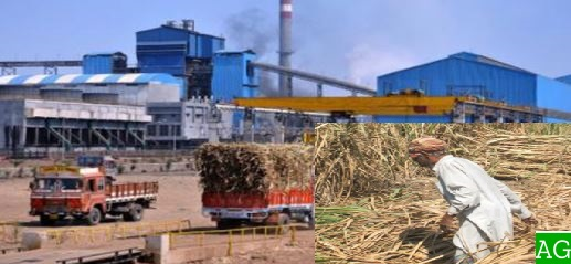 Sugar Mills Appealed from Government to Bound Farmer