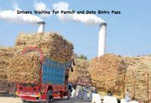 Photo of Sugarcane Farmers in Pakistan and Sugar Industry Propaganda