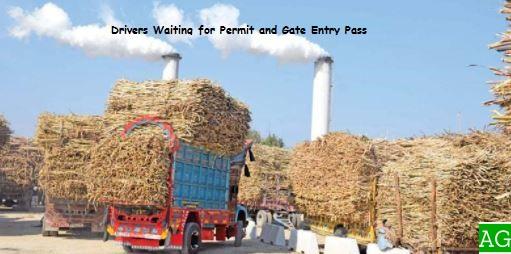 Sugarcane Farmers in Pakistan and Sugar Industry Propaganda