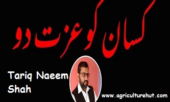 Photo of Its Not My Words Its My Pain Best Article By Tariq Naeem Shah