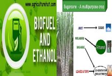 Photo of Sustainability Can Be Increased By Producing Ethanol From Sugarcane Juice